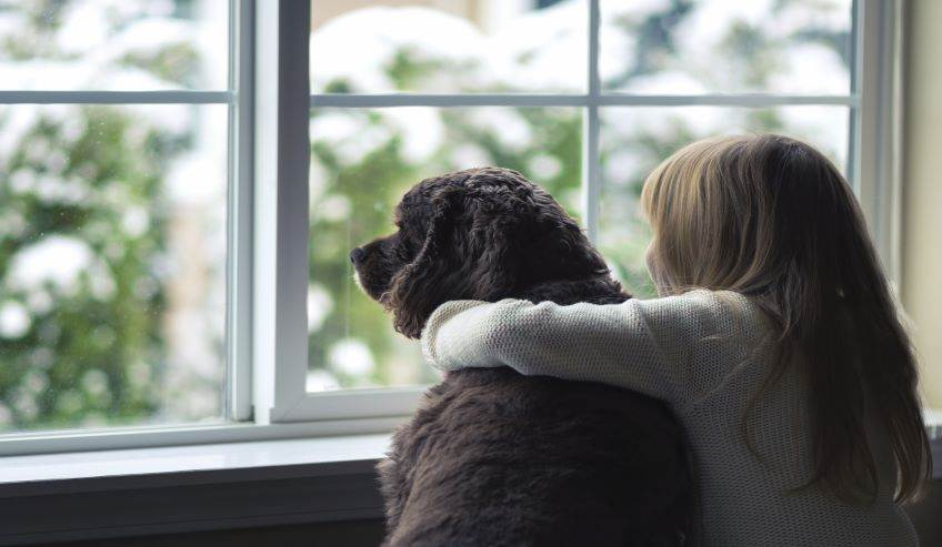 Child and dog looking out a window with insulating glass.